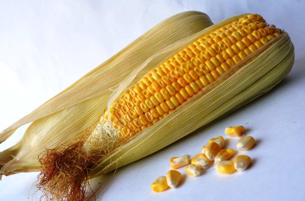 The Wisconsin State grain is corn.