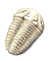 The Wisconsin State fossil is the trilobite.